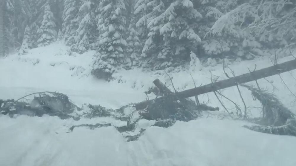 Haos zbog snega kod Priboja: Više od hiljadu potrošača ostalo bez struje, situacija je teška