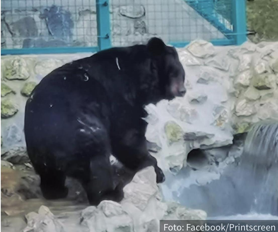 Medved Uroš izašao iz pećine, pa OTKRIO kakvo nas vreme čeka: Pogledajte da li je zimi stigao KRAJ (FOTO)