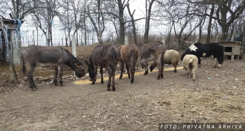 """""""Prvi put su došli tako blizu"""" Vukovi napali šest magaraca kod Ljubuškog"""