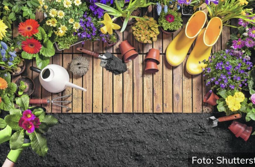 ZBOGOM, KRVOPIJE! Otarasite se komaraca i ostalih buba uz biljke koje možete uzgajati u svojoj bašti