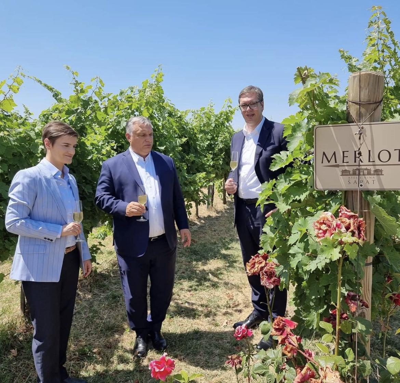 VUČIĆ, BRNABIĆ I ORBAN u fantastičnim vinogradima Srema /FOTO/