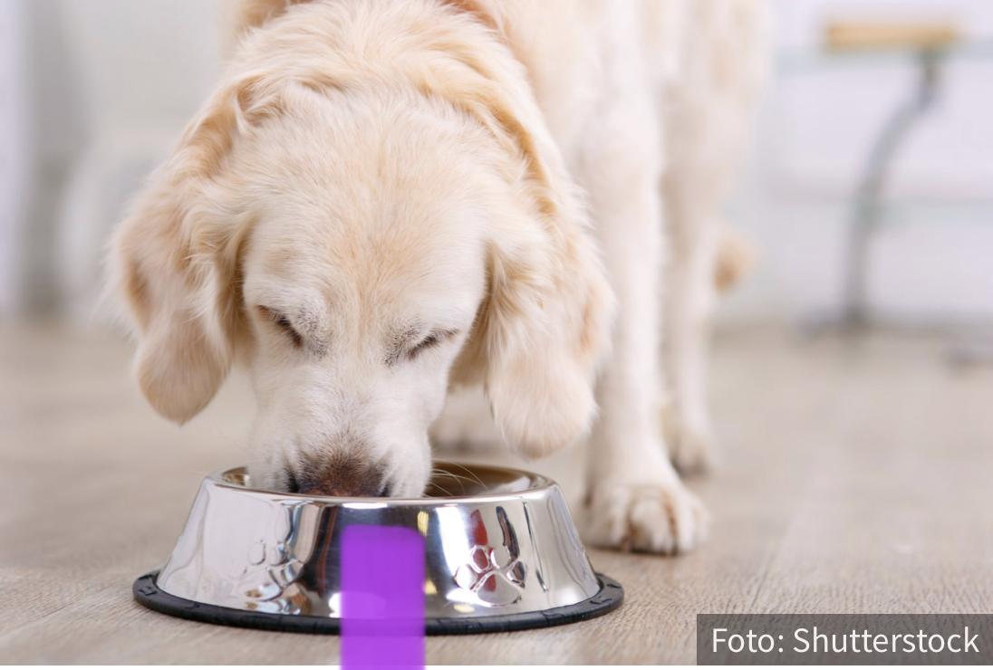 Iskoristite sezonu i napravite mu slane KEKSIĆE: Zašto je bitno da svom ljubimcu dajete da jede BUNDEVU?