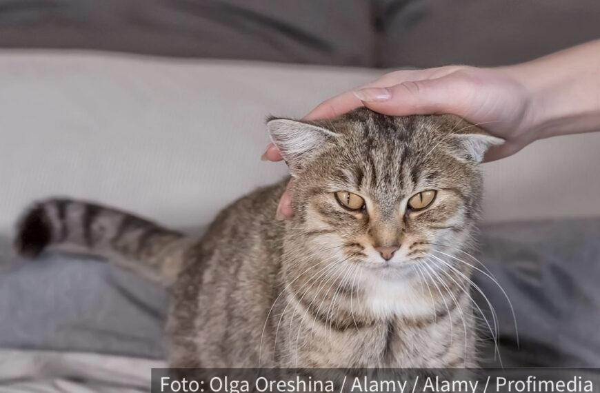 Tako želi nešto da vam kaže: Šta mačke POLOŽAJEM REPA poručuju vlasniku?